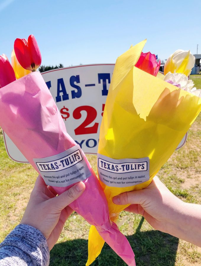 Looking for a fun and affordable outdoor activity for all ages? Travel about an hour north of Dallas, to visit Texas-Tulips!