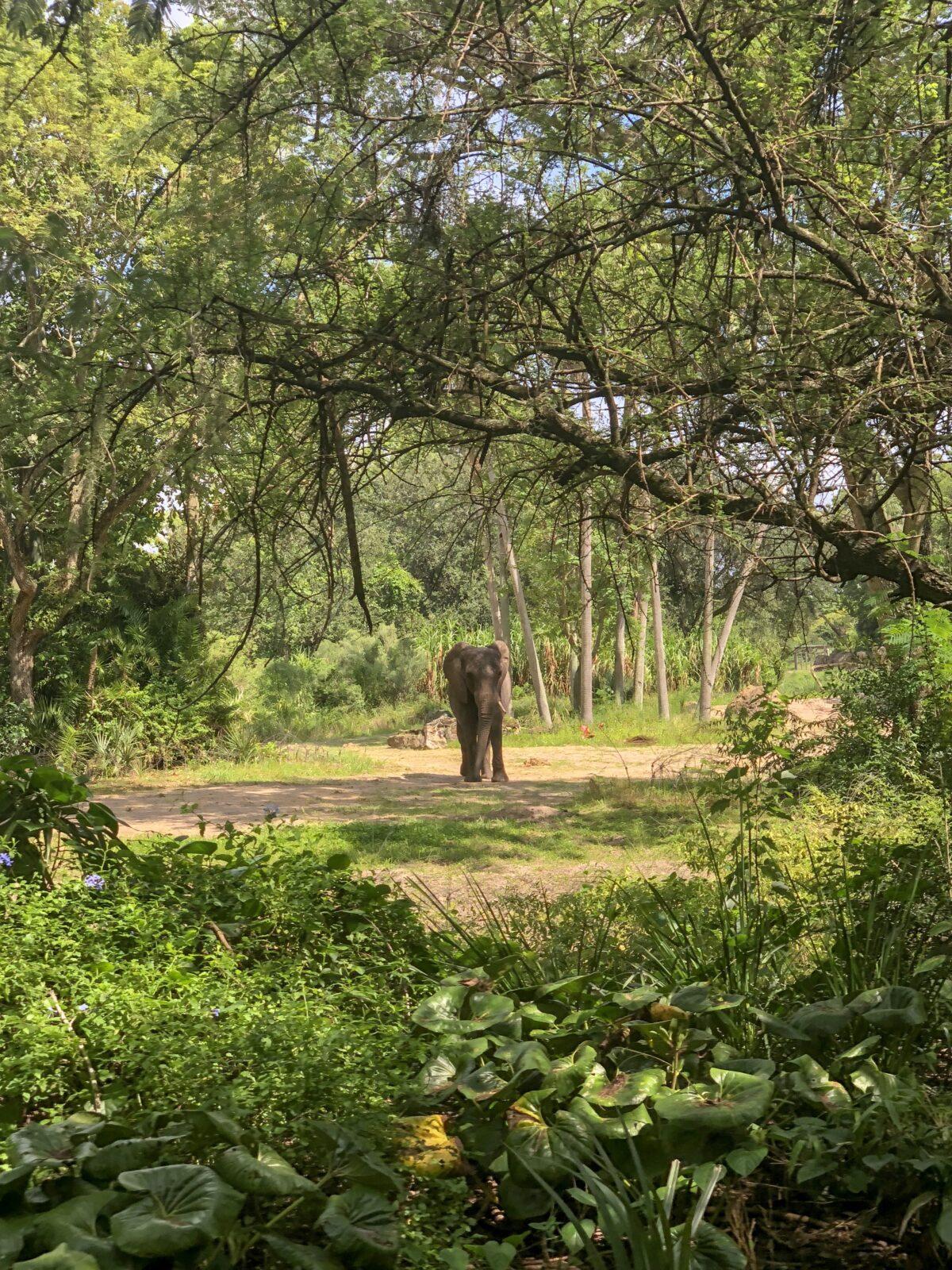 walt disney world, disney world, animal kingdom, safari, kilimangaro safaris, walt disney world in one day